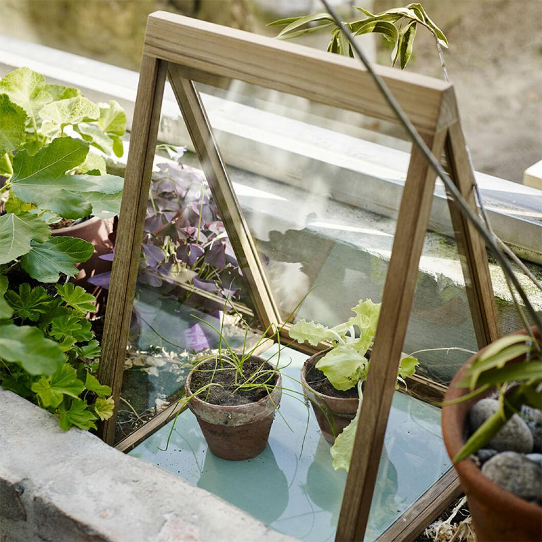 miniväxthus från skagerak