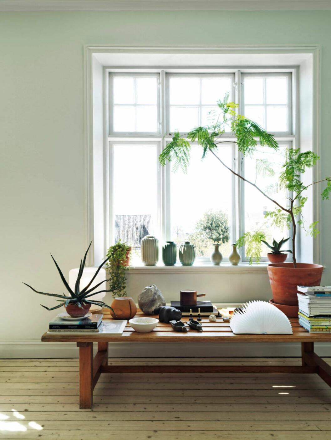 I vardagsrummet står växter och inredningsobjekt i fokus