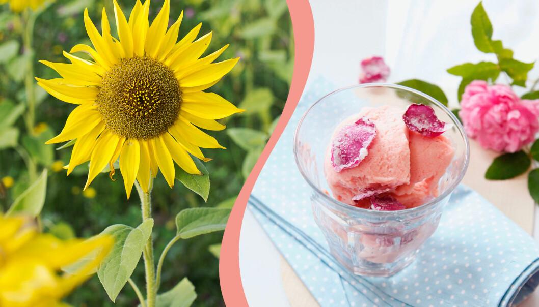 Rosor och solrosor är ätbara blommor som du kan använda i mat och dryck.