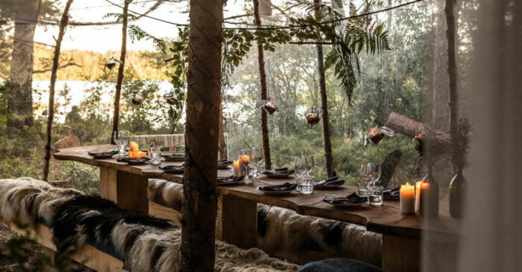 Stedsans in the Woods är Årets destination på ELLE Deco Design Awards 2020
