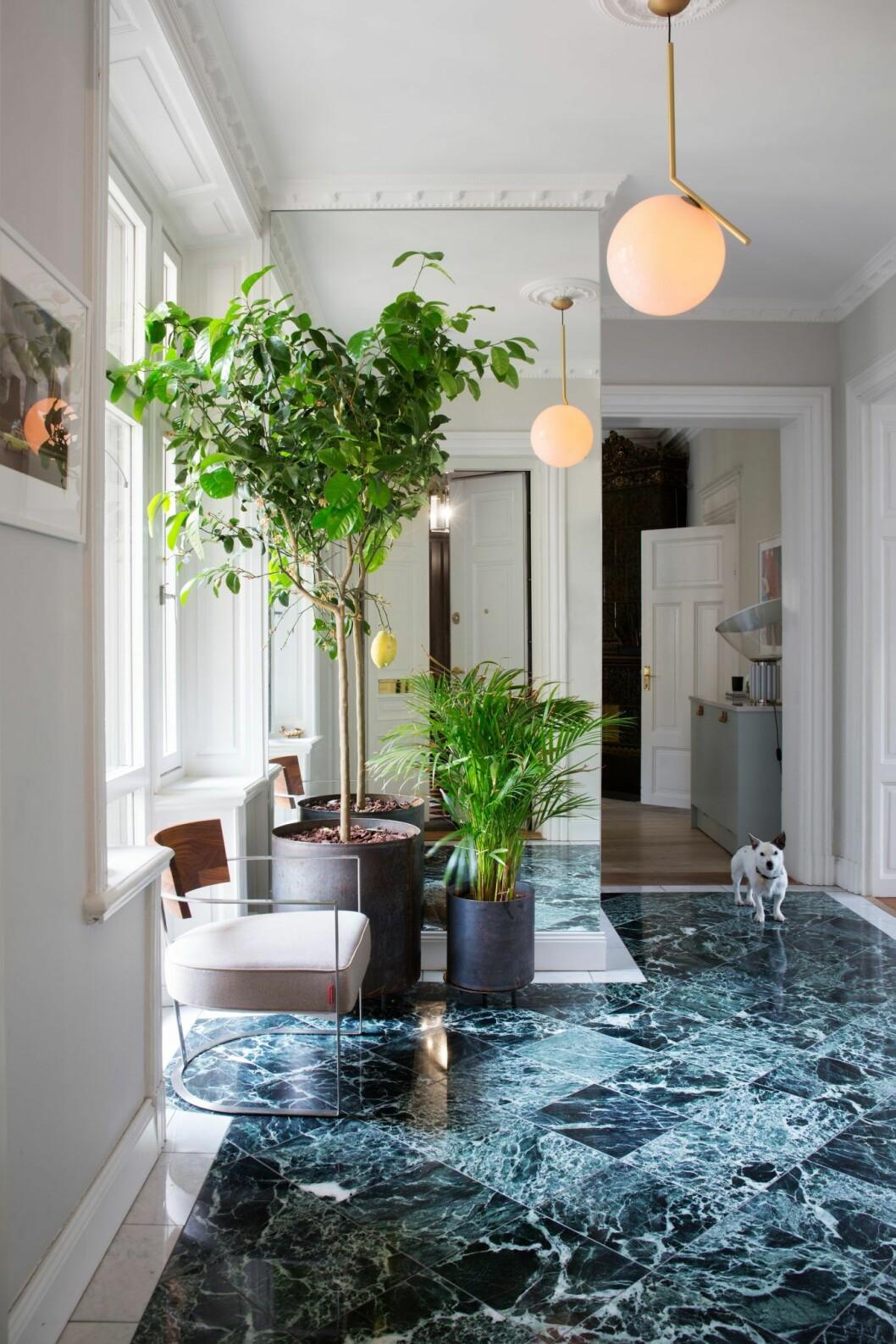 Växter möter grön marmor i lägenheten på Östermalm, Stockholm