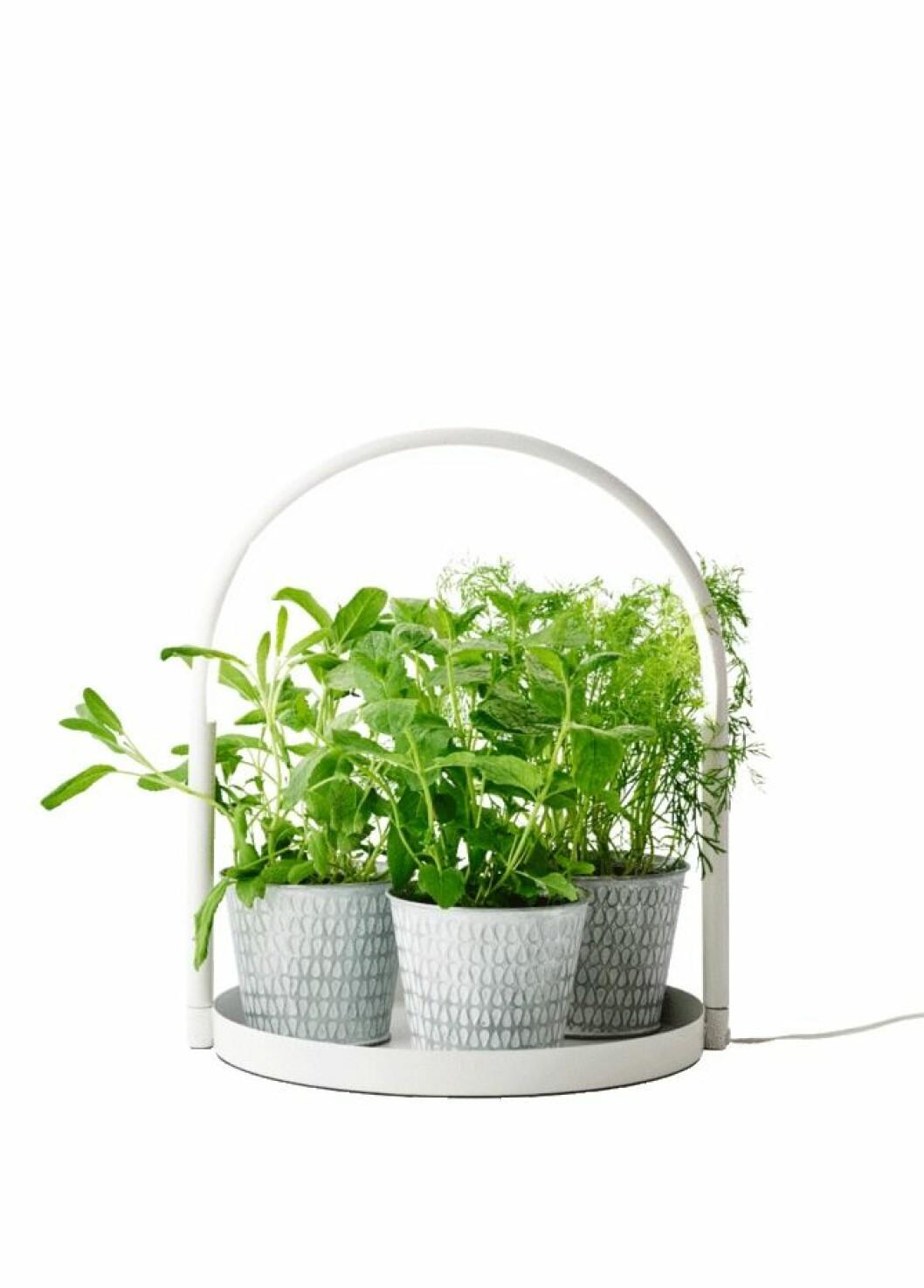 Dalia rund bricka som rymmer många färgstarka växter
