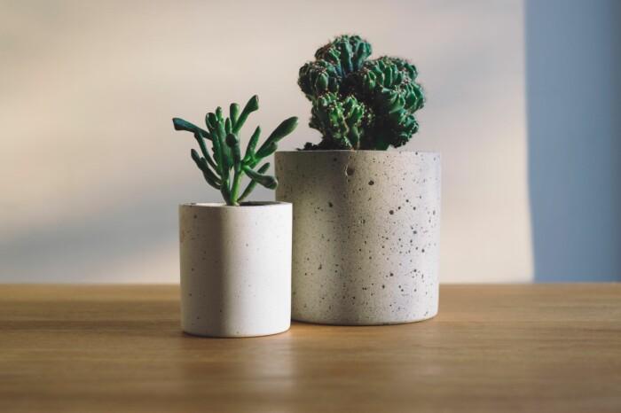 suckulenter och kaktusar är lättskötta inomhusväxter