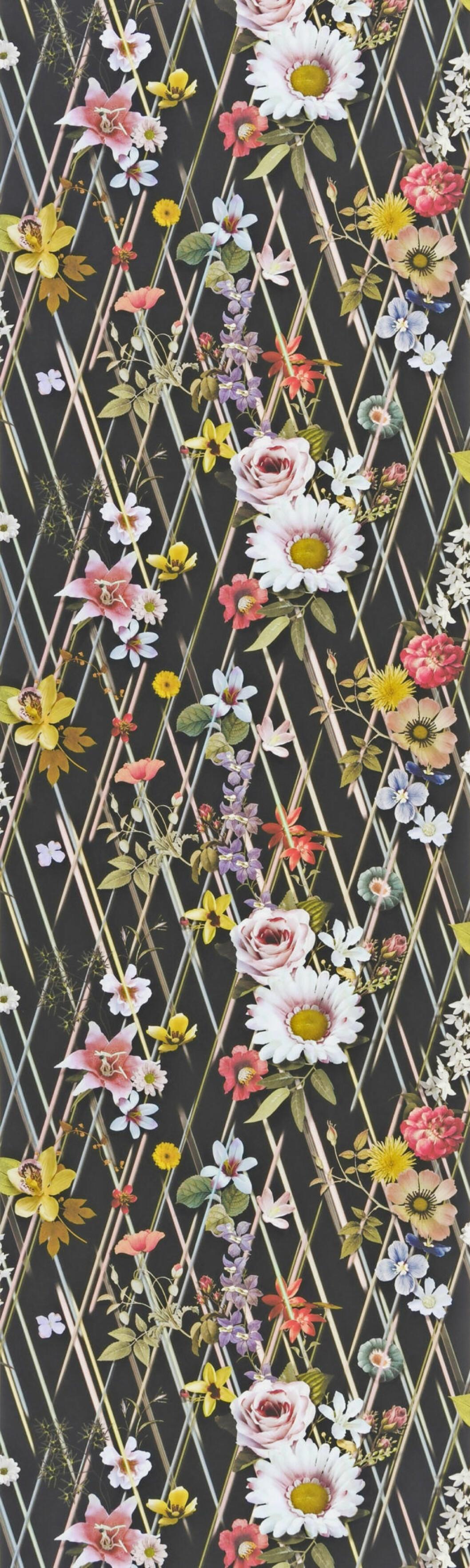 Den blommiga tapeten Rocaille mot svart bakgrund från Designers Guild