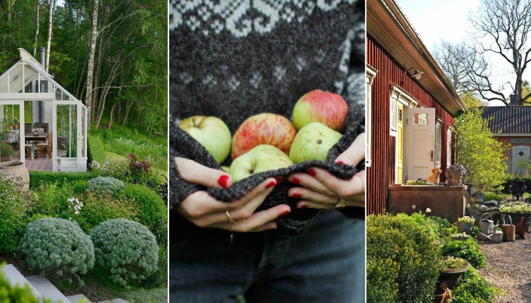 olika trädgårdar