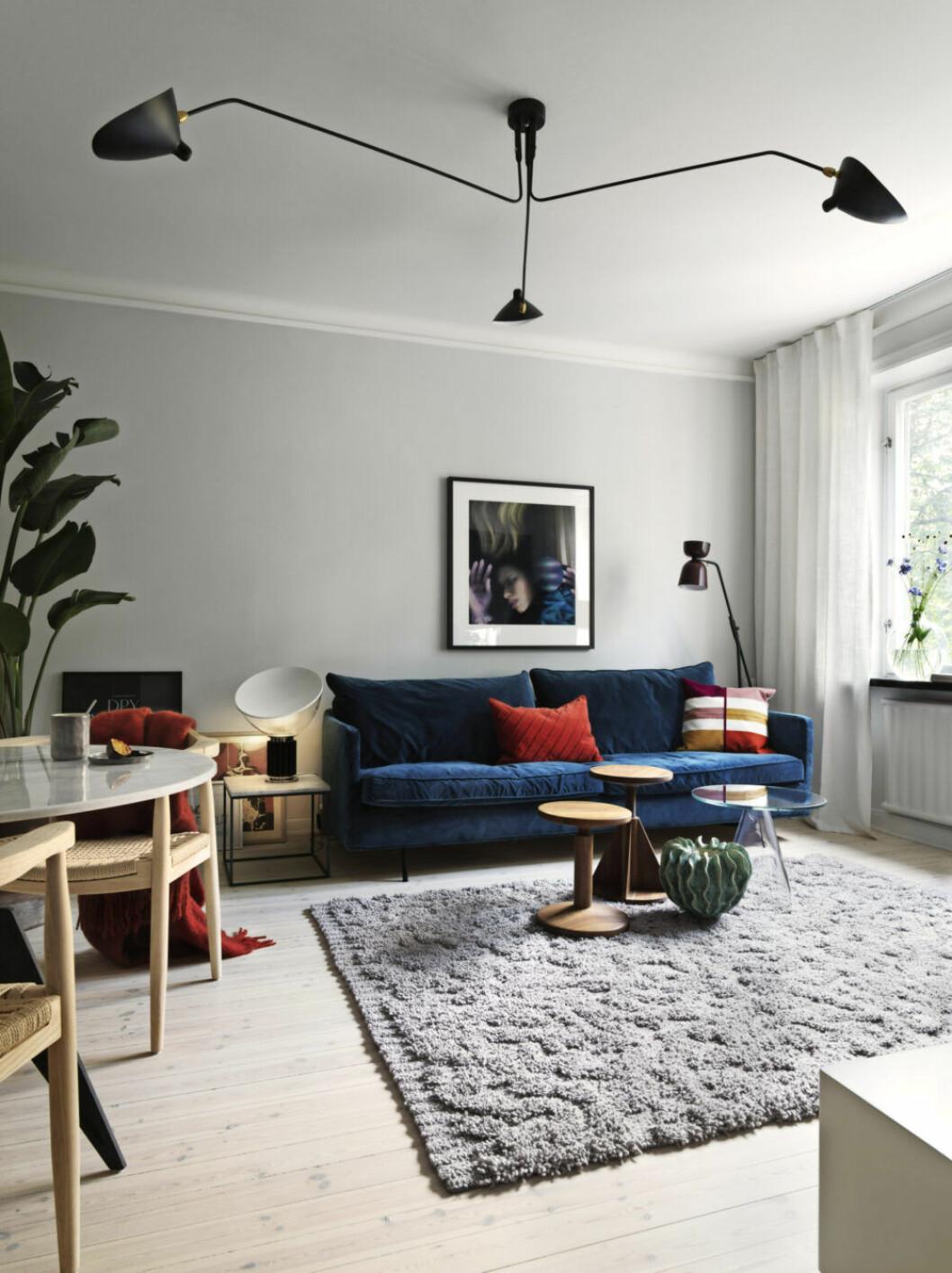 Mörkblå soffa, stora växter och stor matta i vardagsrummet