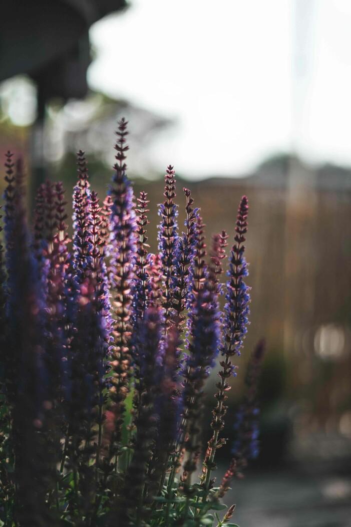 torktåliga växter för soliga lägen