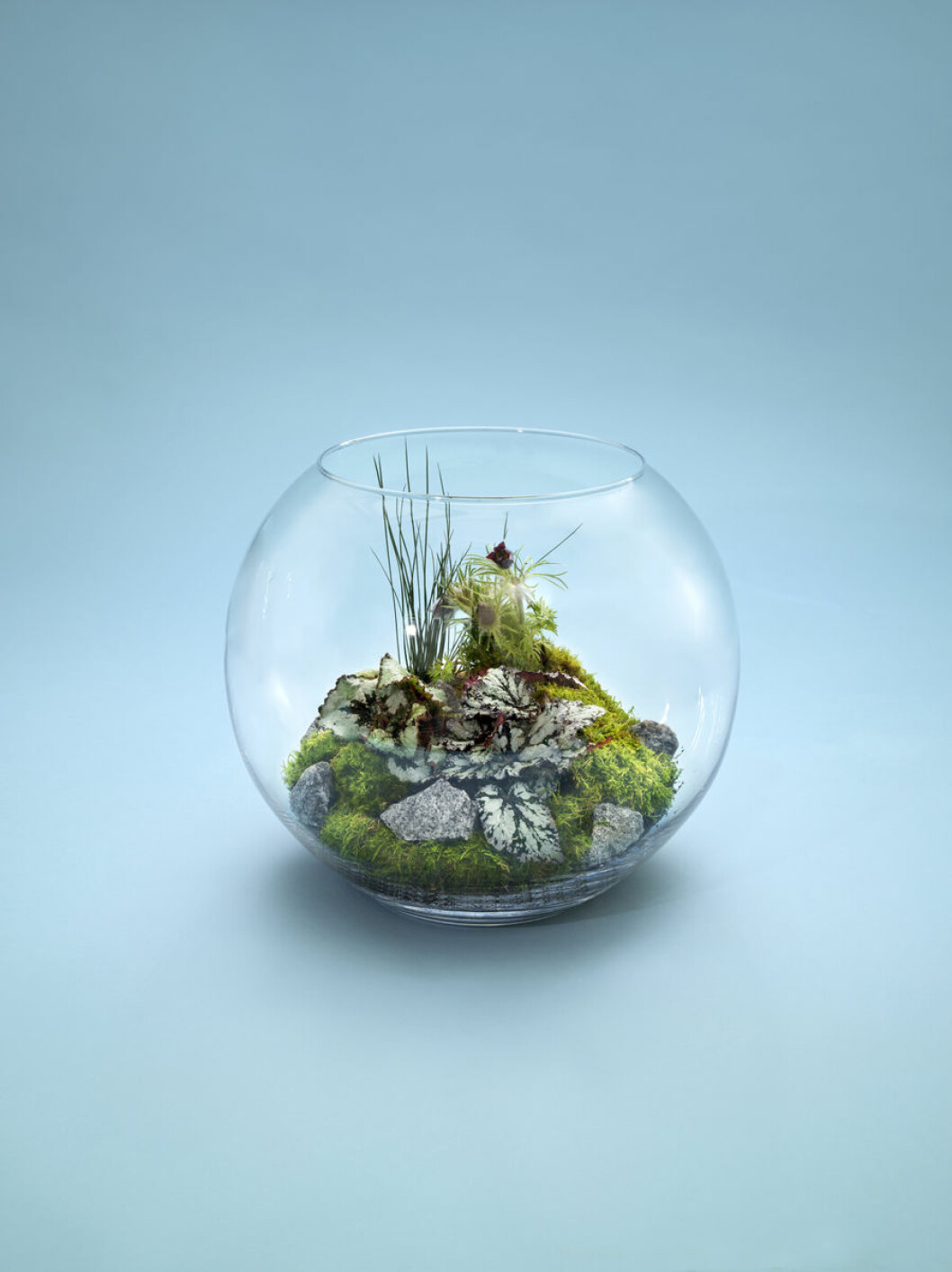 Smart terrarieodling