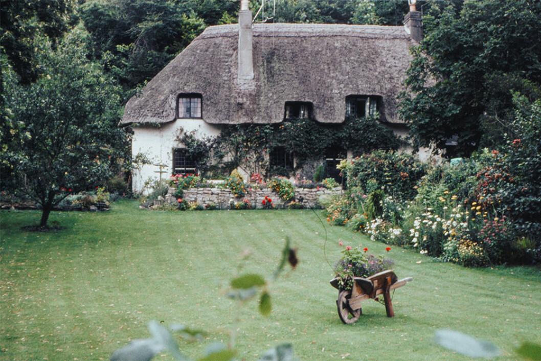 Cottage garden-ideal är trendigt i trädgården 2020