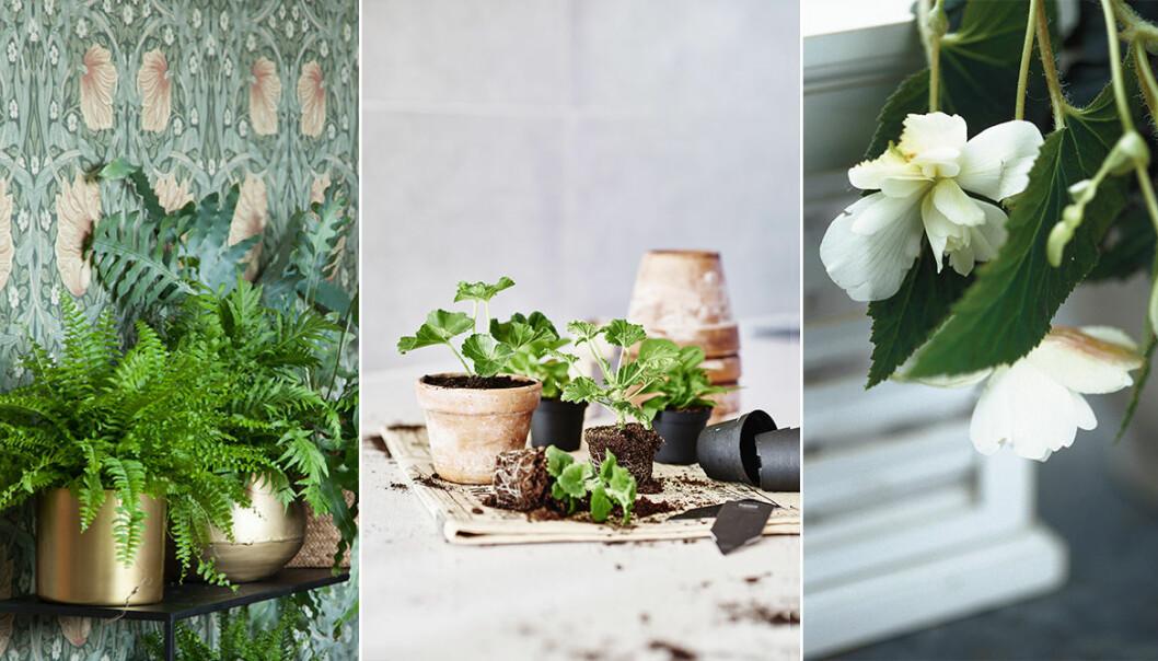 Trendiga växter hösten 2019