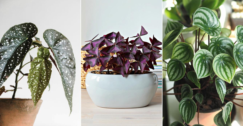 trendiga växter 2021