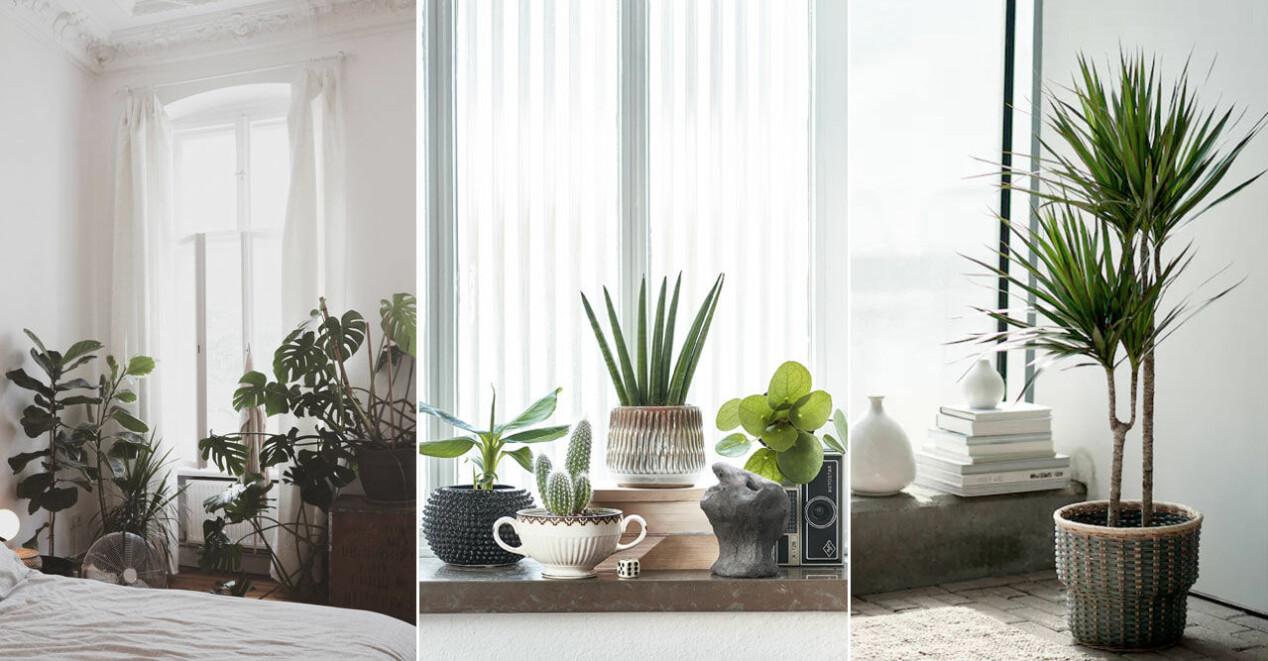 5 trendiga inomhusväxter hösten 2021
