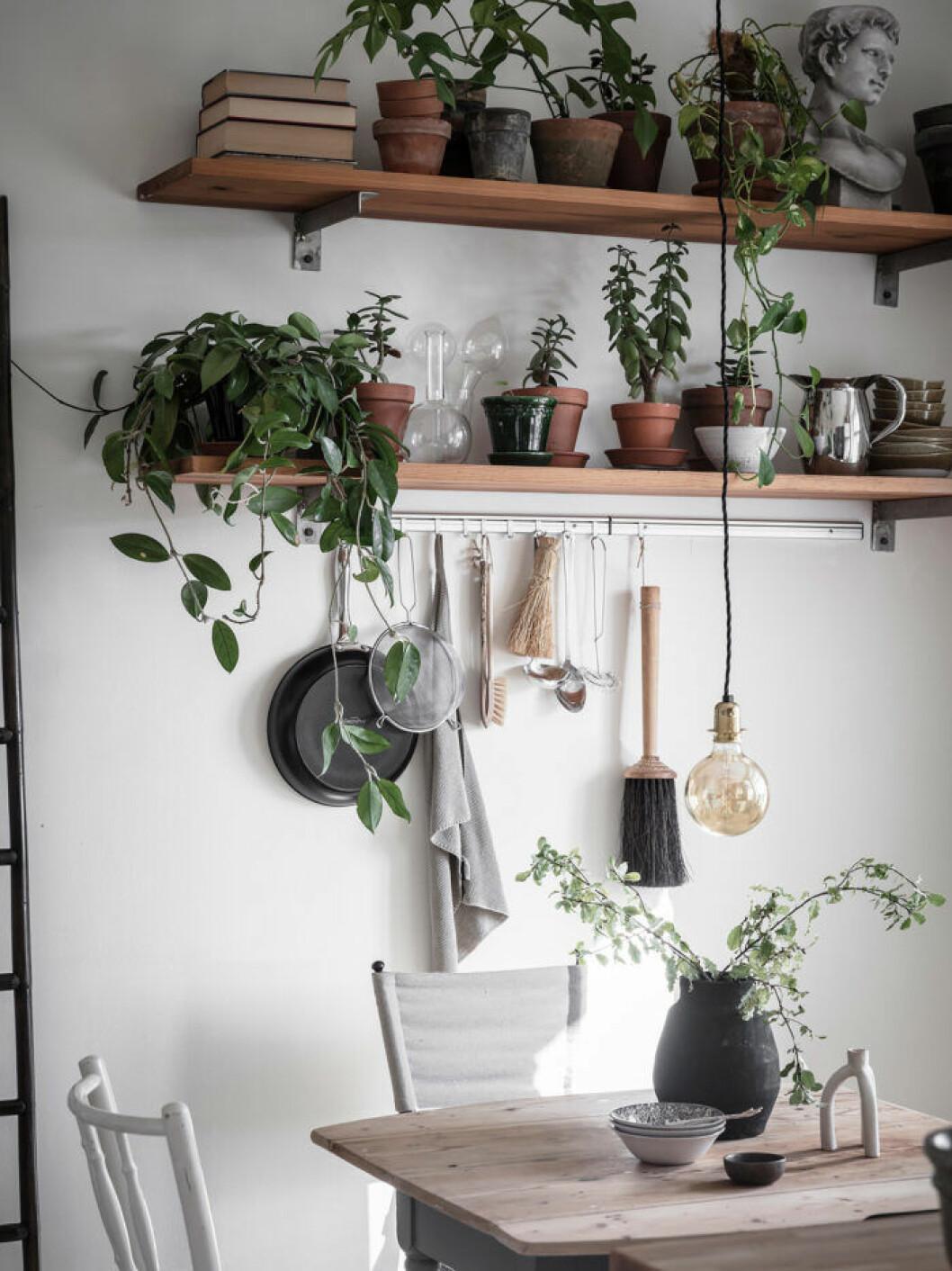 Naturmaterial och växter i köket