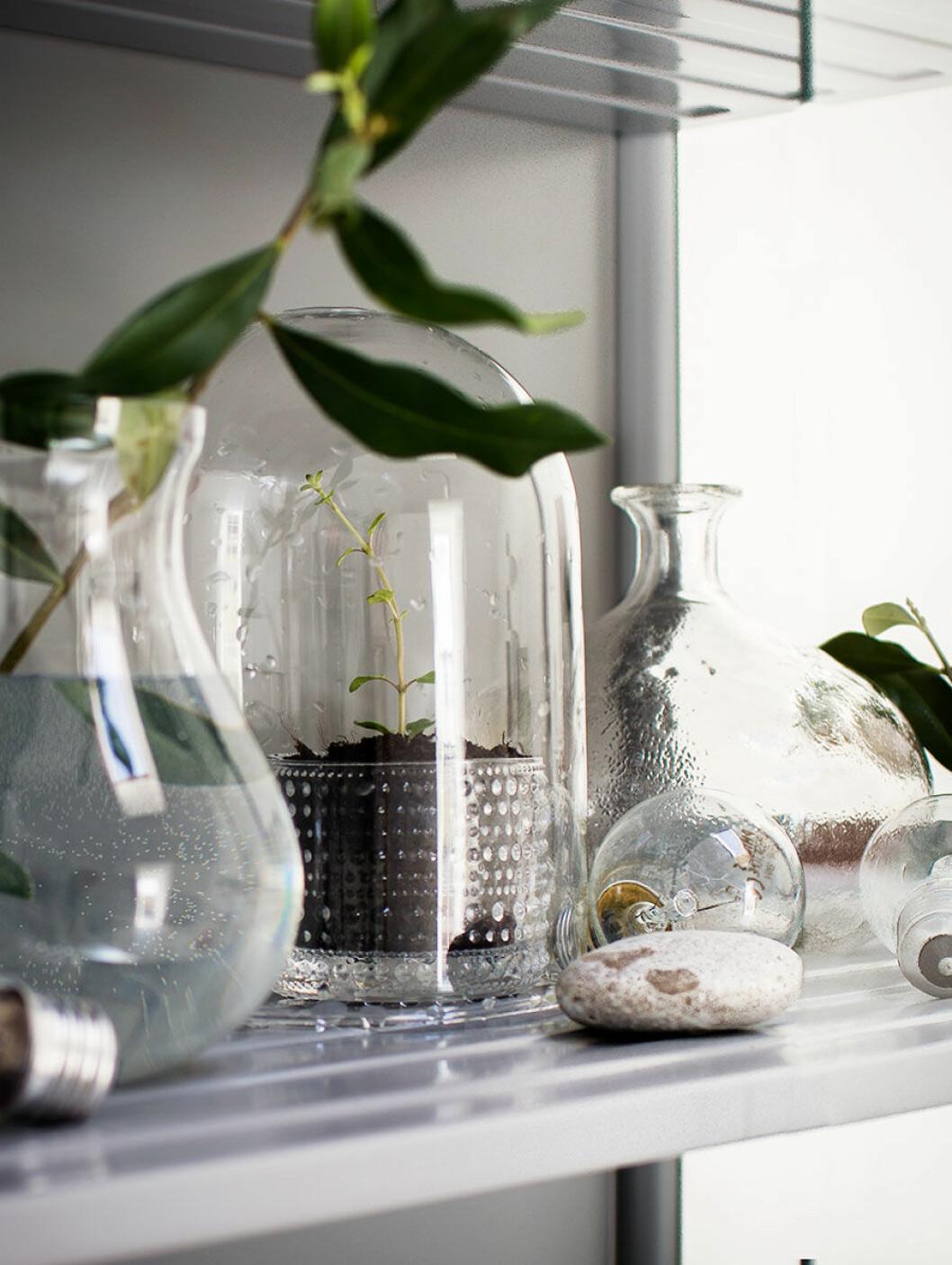 Glasflaskor med odling