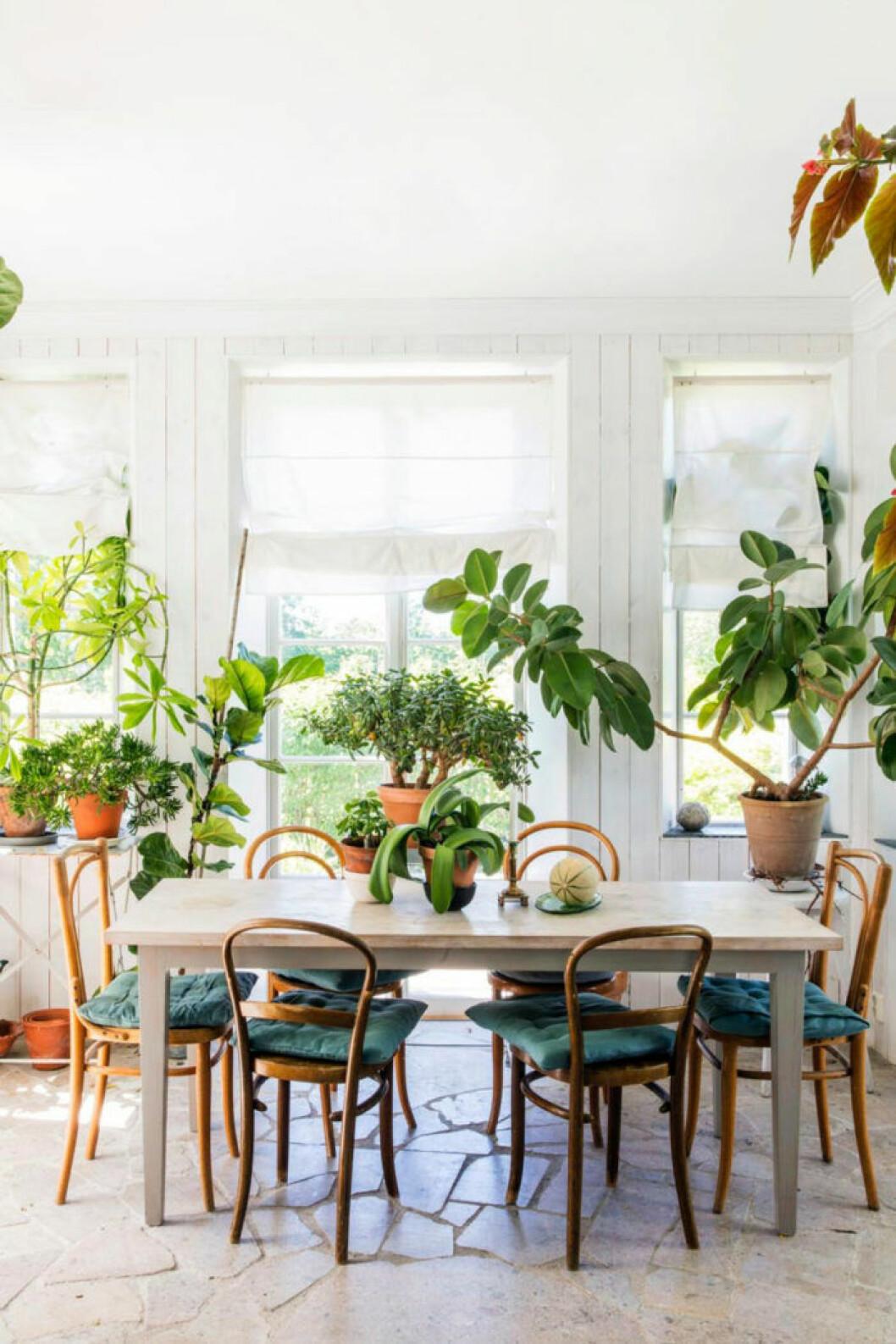 Växter i matplatsen