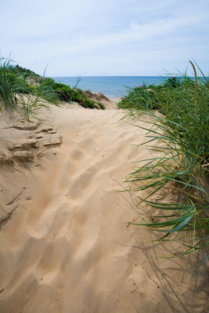 Ugglarp strand, resetips
