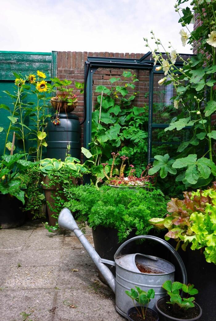 vattna alla grönsaker och växter regelbundet