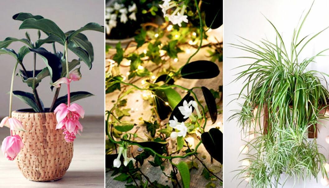 Dessa växter är påväg tillbaka