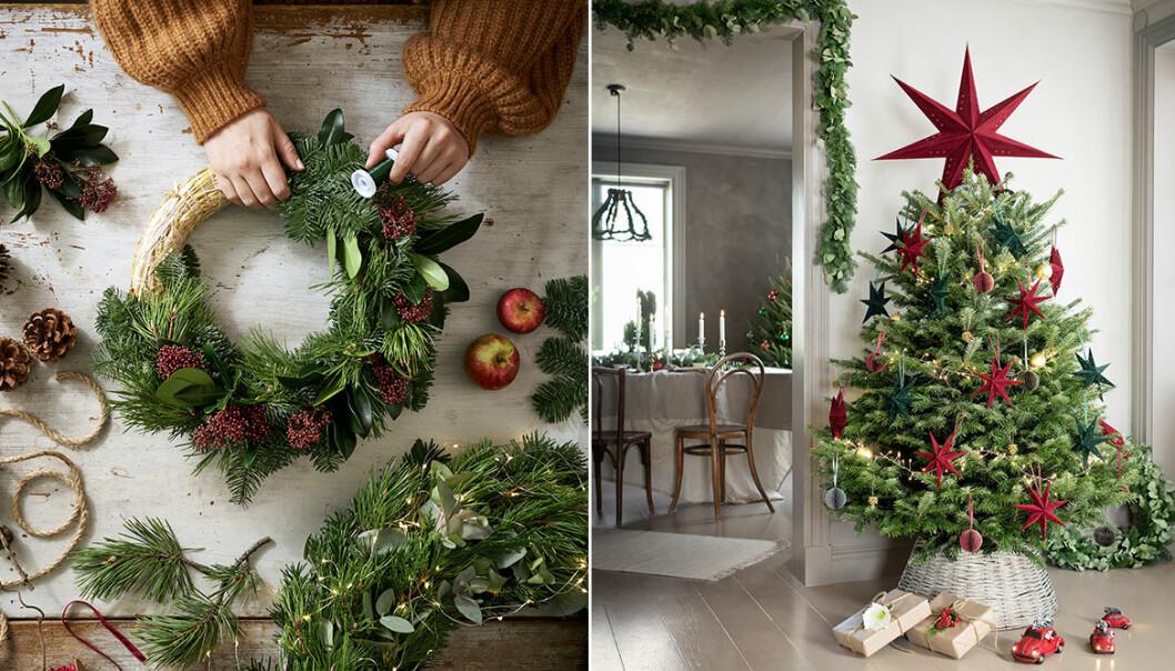växter och blommor som är trendiga julen 2020