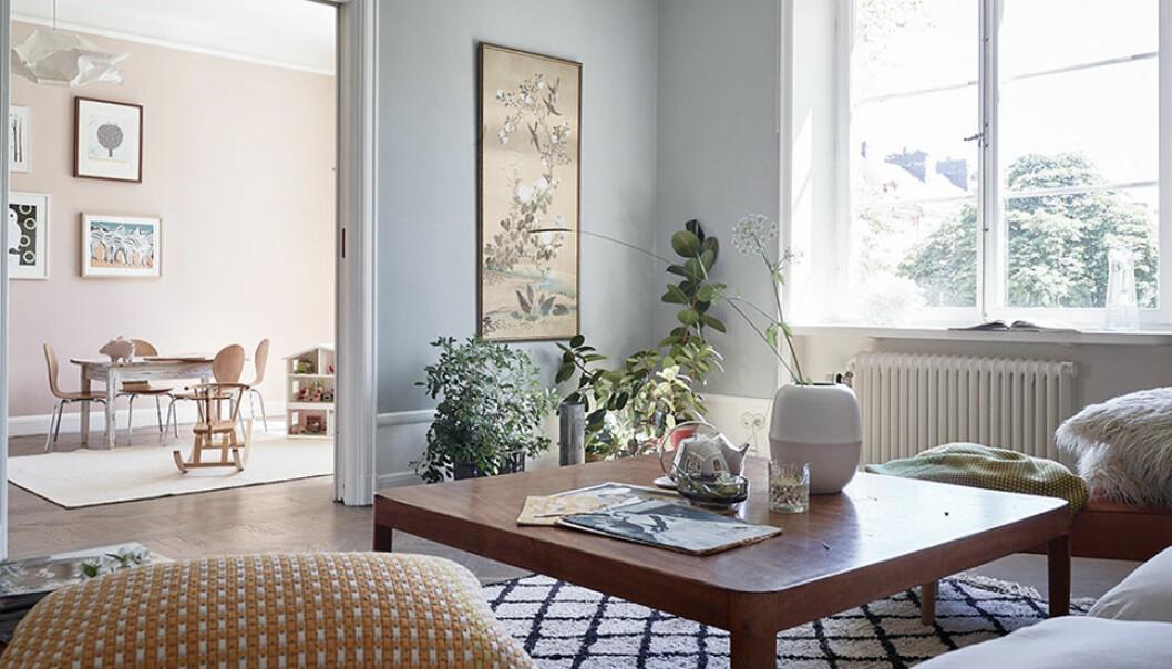 Växterna som rensar luften – för hemmets alla rum.