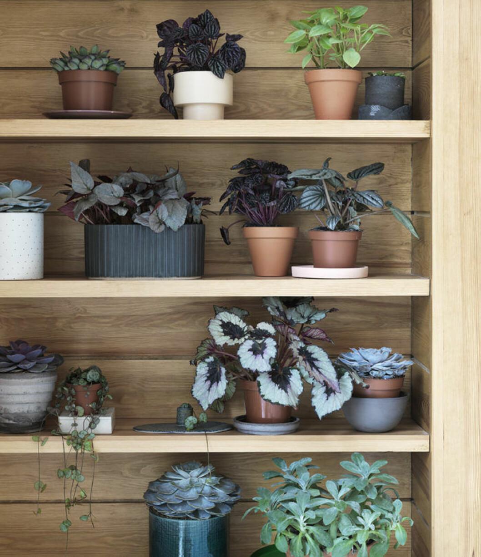 Hylla med olika gröna växter