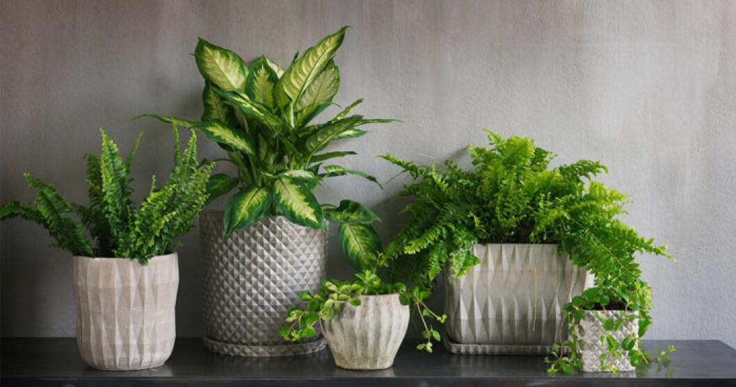 På vintern kan växterna se rätt fula ut, här är några tips för hur du bäst tar hand om dem.